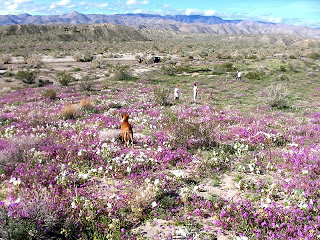 Stopping the invaders in Anza Borrego